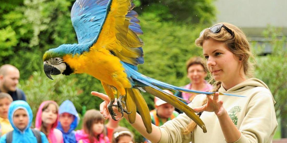 papagaj show